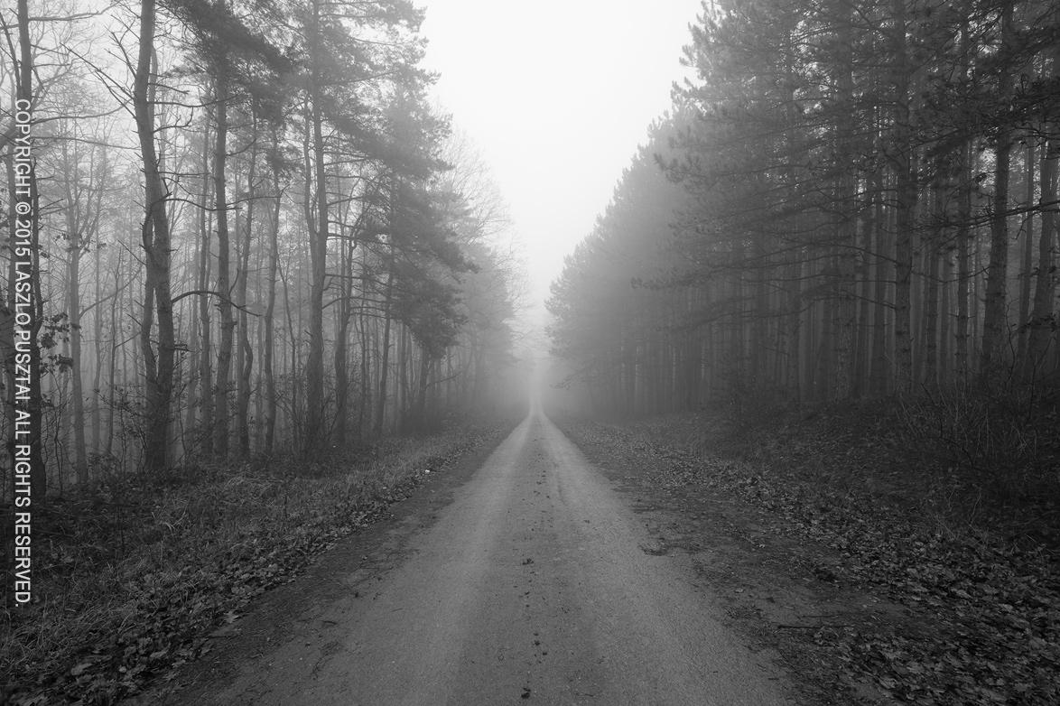 Foggy, Damp Evening